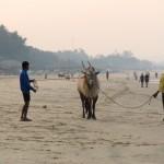 Индия – страна контрастов и моментальной материализации