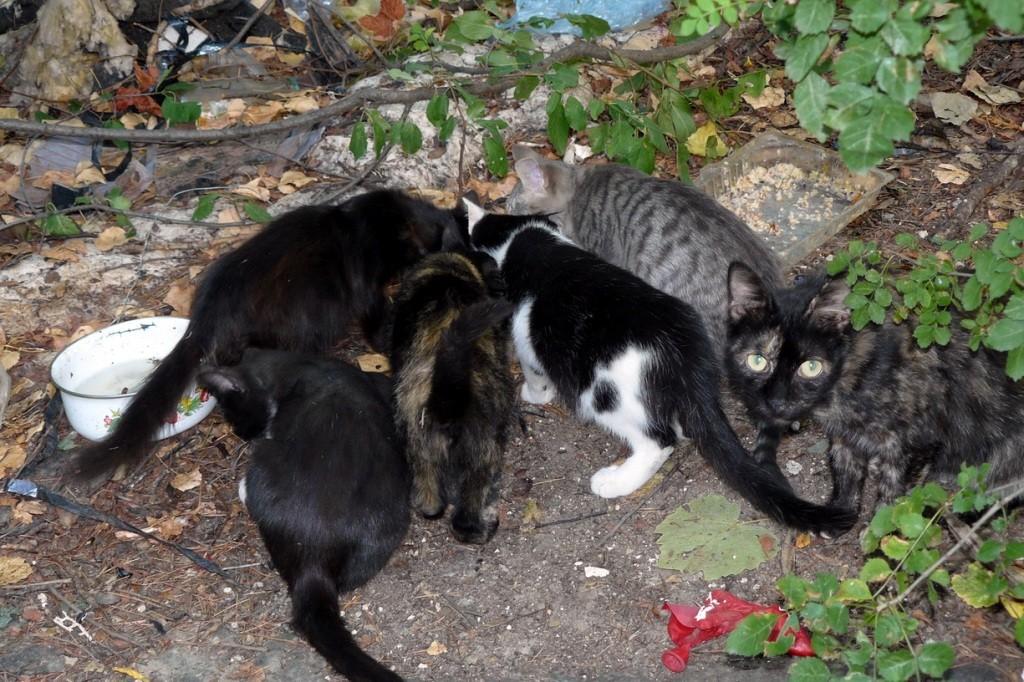 Crimea, Крым, кошки, Ялта
