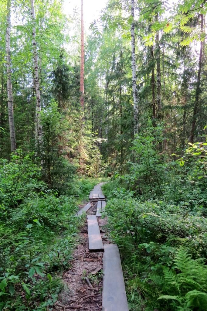 Остатки деревянных настилов