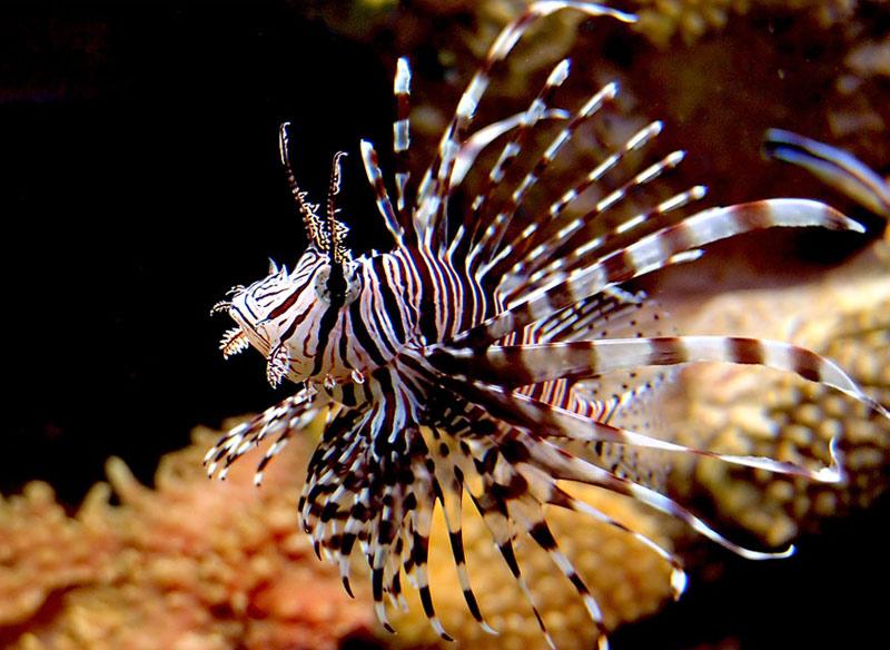 австралия, ядовитая рыба, ехать нельзя, страшные места,